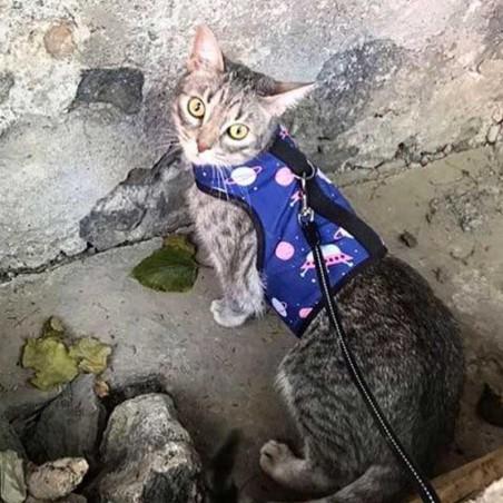 Arnes para gato Ovnis Bambucat Bambucat